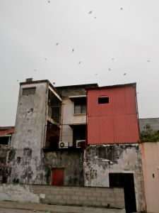 An urban 'swiftlet farm' in George Town, Penang