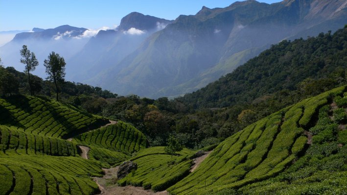 Tea plantation in the Western Ghats. Source: http://www.onthegotours.com/blog/2012/07/indias-western-ghats-awarded-unesco-world-heritage-status/