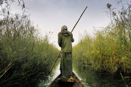 A Marsh Arab poles his canoe through Kirmashiya Marsh in southern Iraq. Photo by Joao Silva