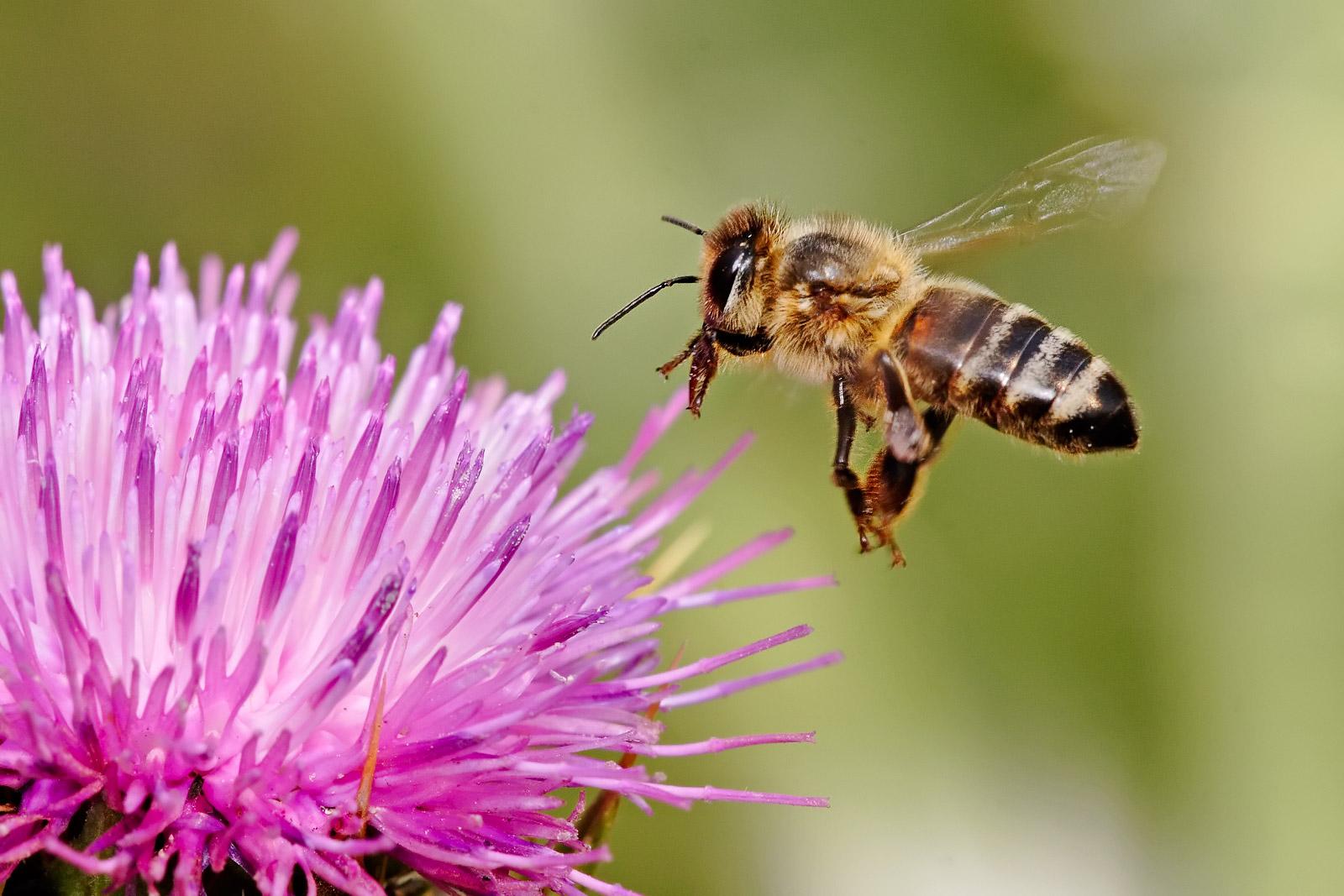 entitle.bees