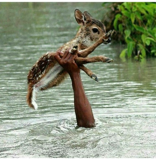 Boy saving deer